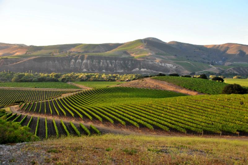 La Rinconada Vineyard